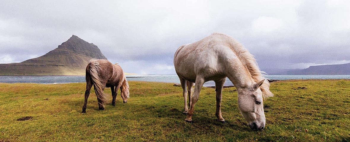 What a horse likes to eat: how to test dietary preferences