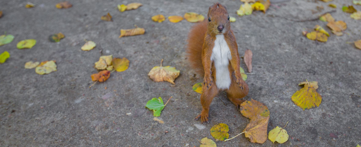 The Real Cost of Paying Attention Squirrel