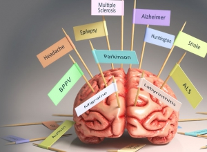 Research in the brain sciences