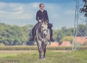 Horses: behavioral research, physiology and biomechanics