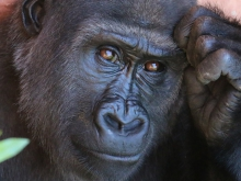 Examples of Animal Behavior Research