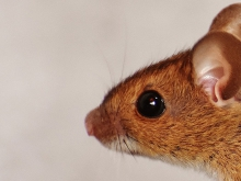 How do mice act in complete darkness?