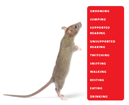 Rat Behavior Recognition