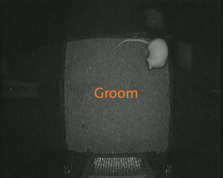 rat behavior recognition groom