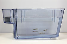 Zebrafish research