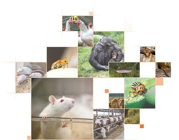 Noldus Animal behavior research