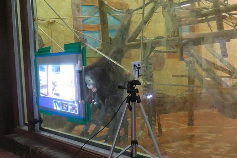 Apes in Seoul Zoo 2