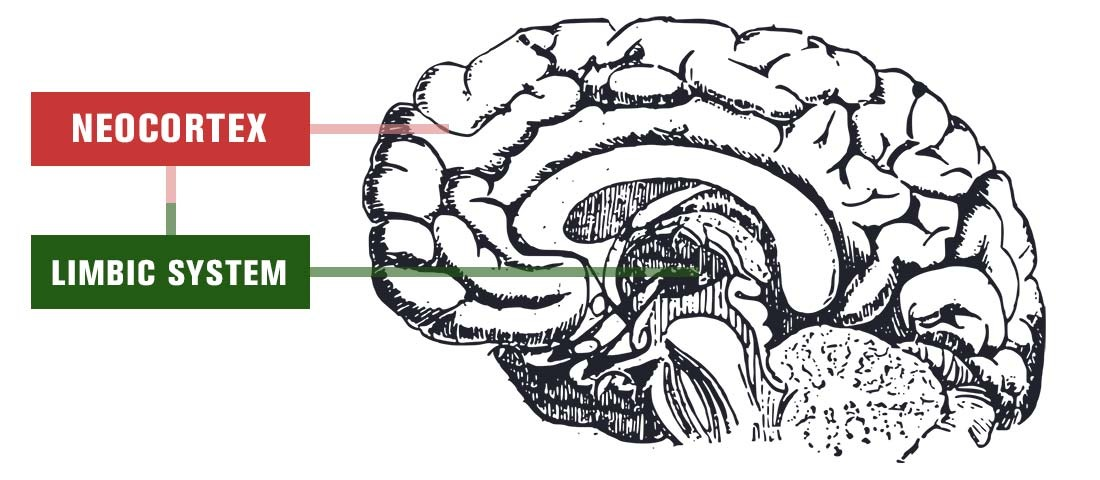 brain illustration neocortex limbic system emotions