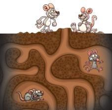 Cartoon mice ground hole