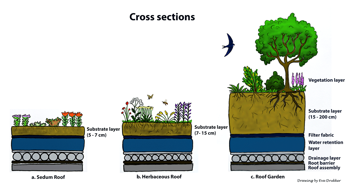 Cross sections green roof