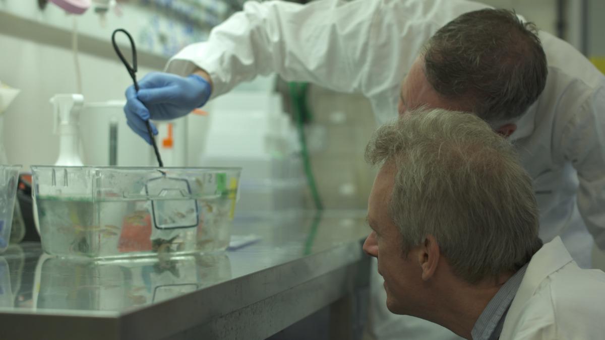 css ruud van den bos zebrafish lab researchers tank