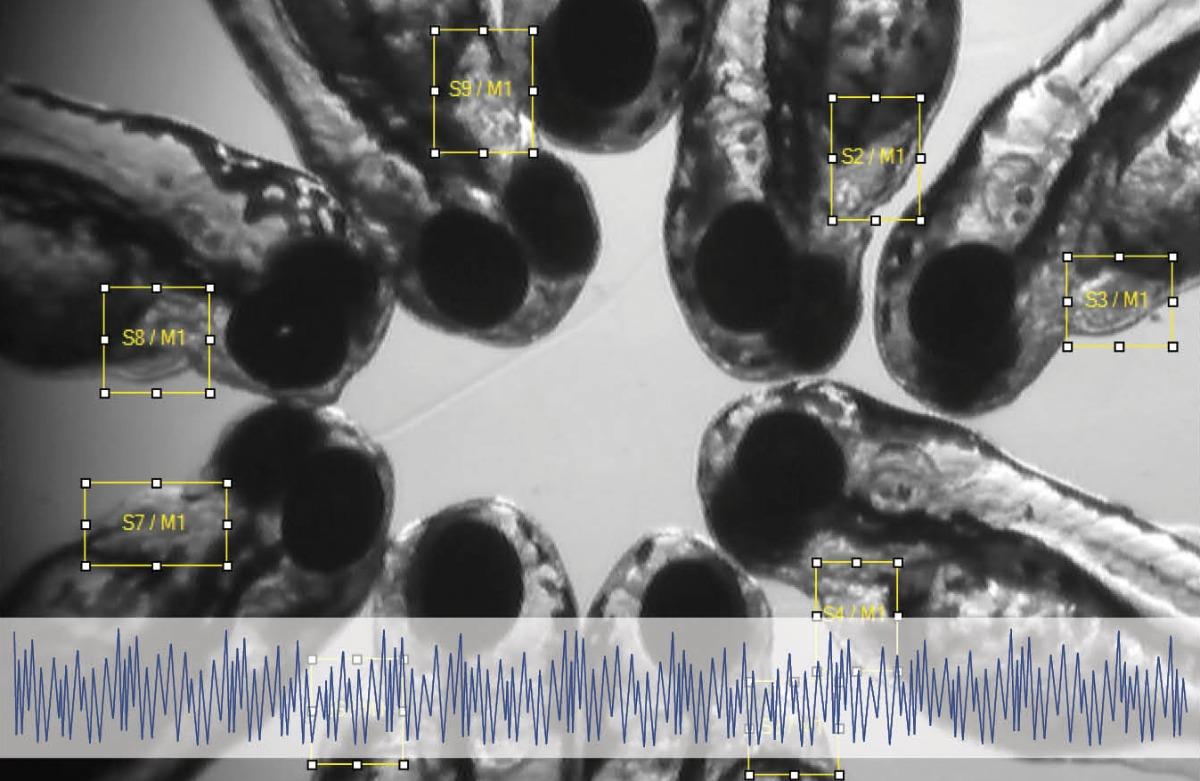 DanioScope larvae integrated image