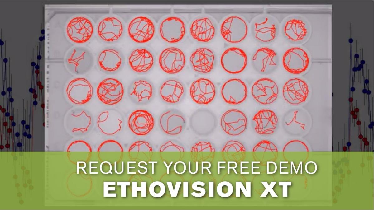 Ethovision free demo movie zebrafish