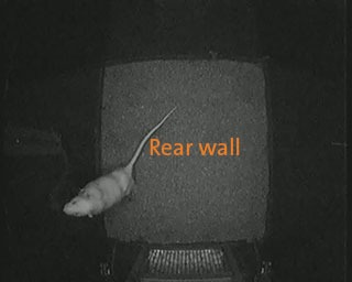 ethovision rat behavior recognition rear wall