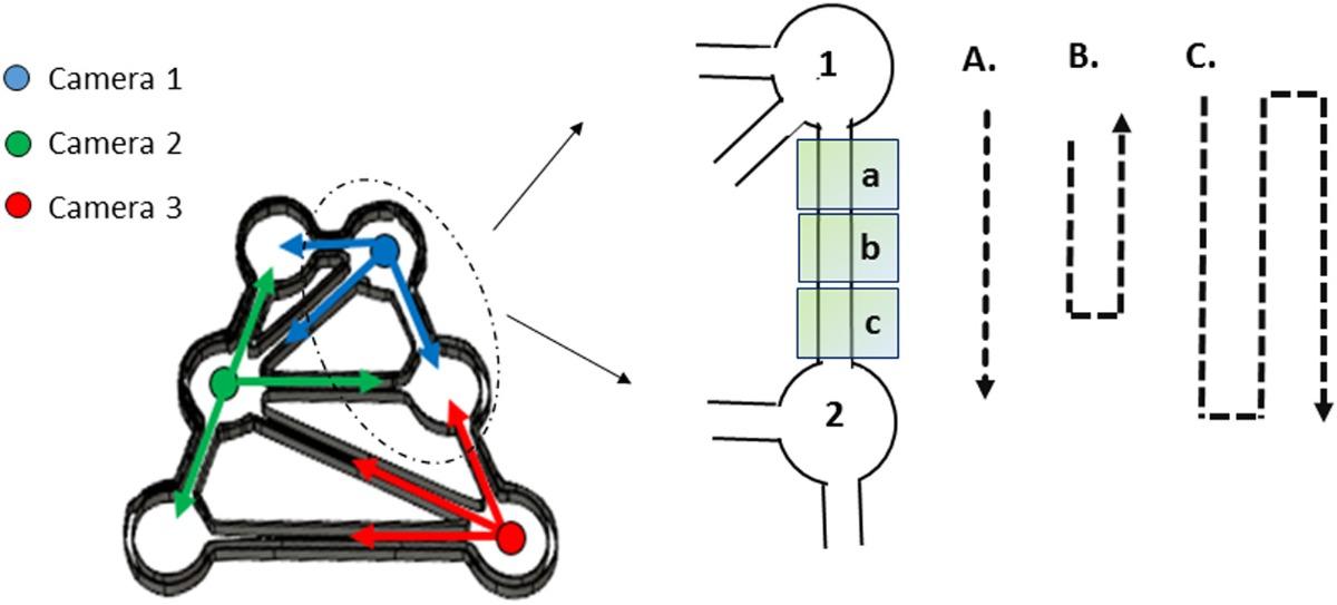 Gammarus zone transition