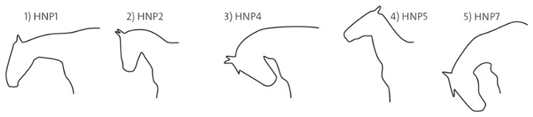 Horse head position cartoon drawing