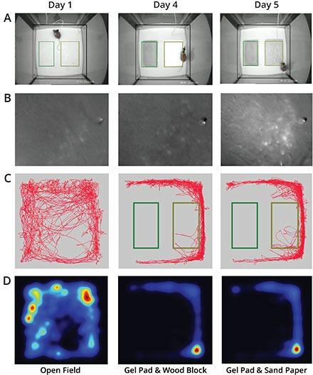 Live calcium imaging