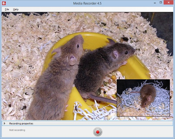 MediaRecorder rats in yellow objects