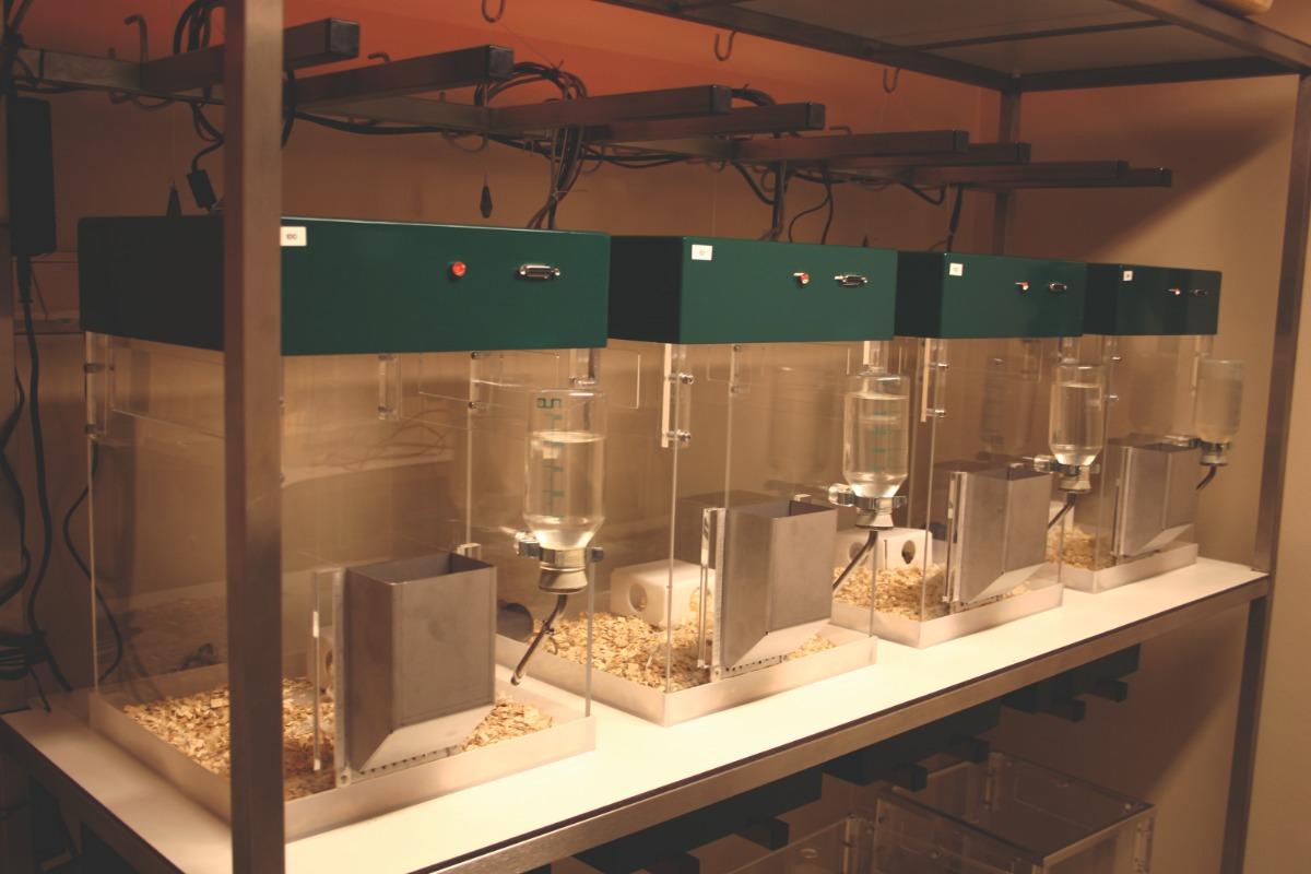 phenotyper four setup wall