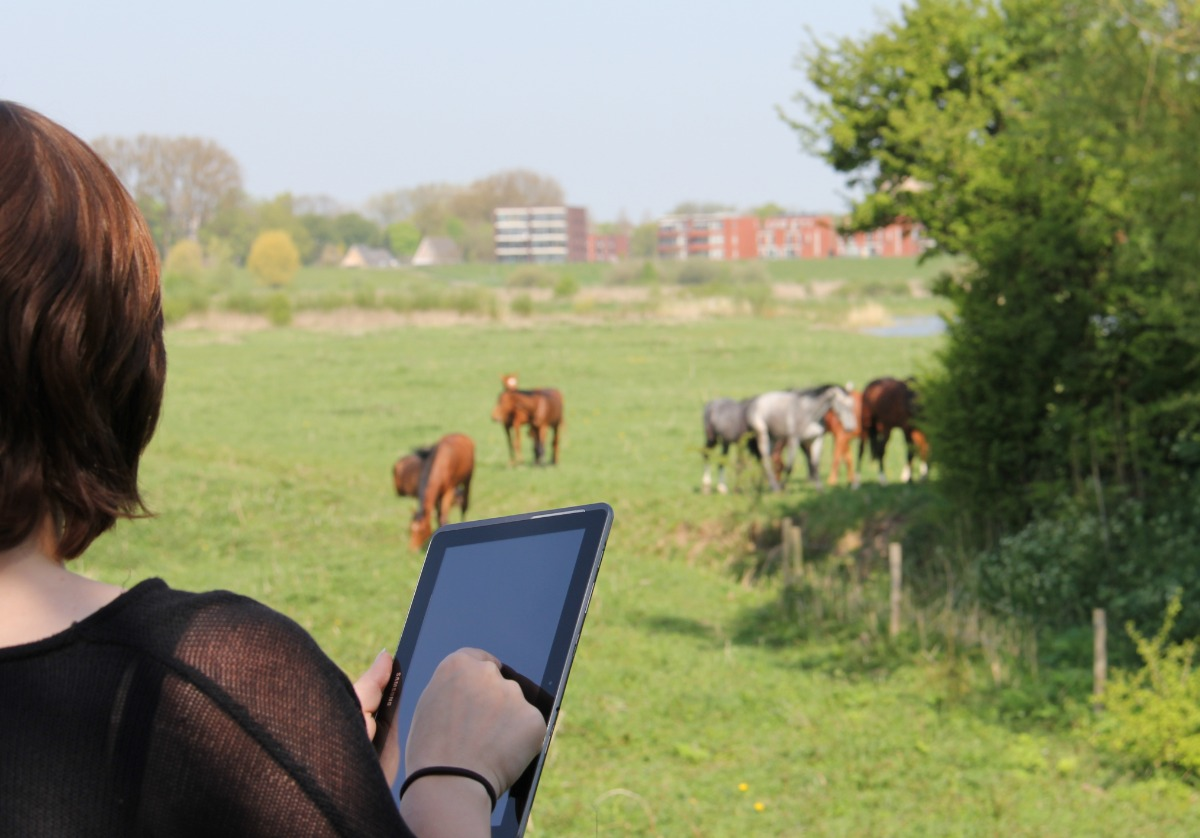 Pocket Observer horses tablet