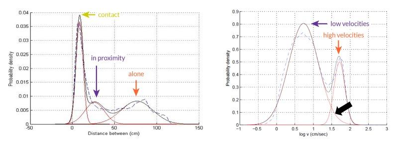 Rat social behavior graphs