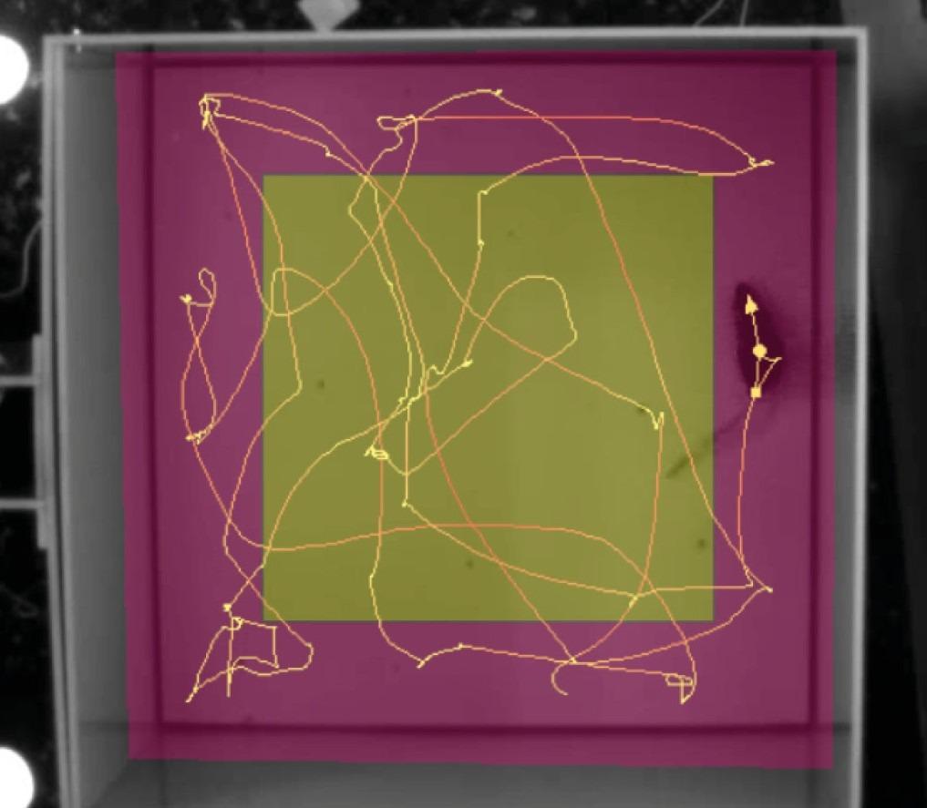 Screenshot EthoVision XT purple yellow