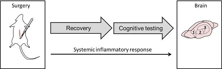 systemic inflammatory response