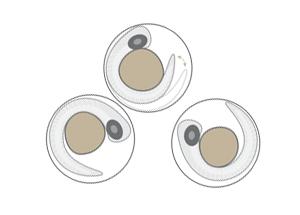 toxicology embryos zebrafish drawing