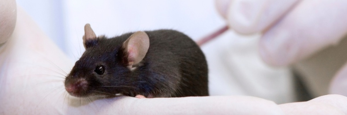 A new sensory and motor scale for the CIA arthritis mouse model