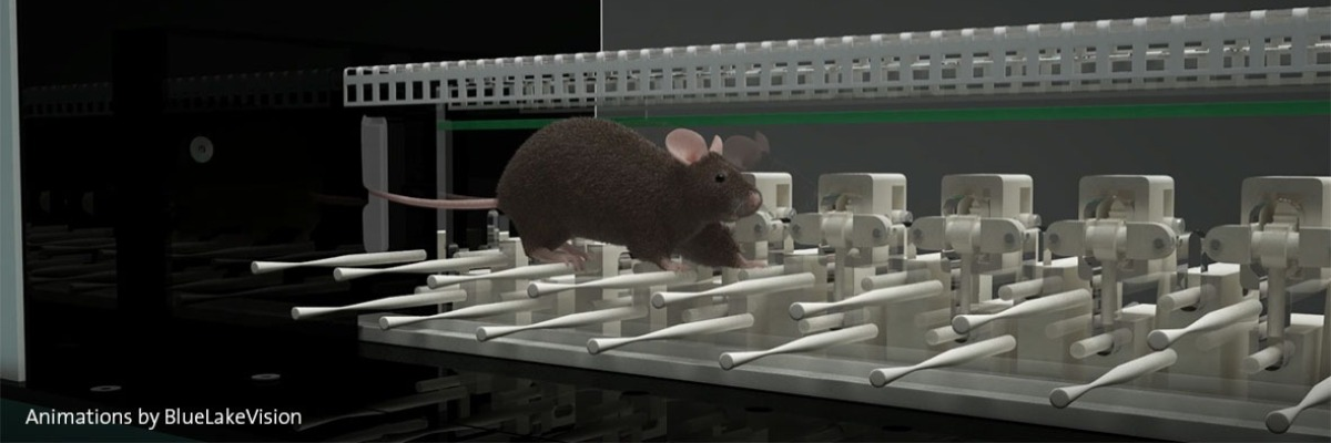 Autistic mice have motor learning difficulties specific to the cerebellum