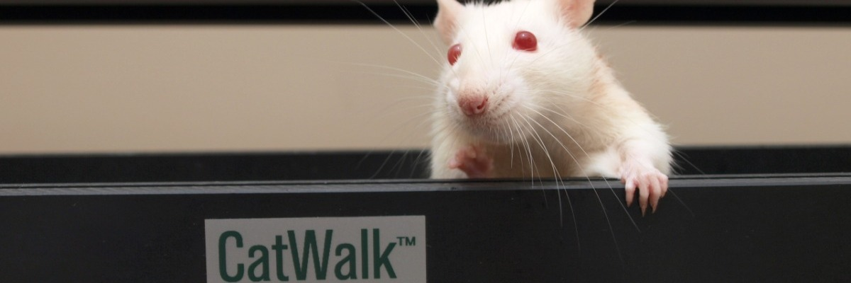 Gait research: let your animals walk freely