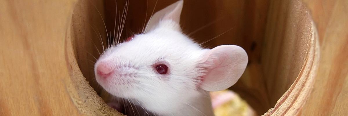 high-throughput-method-natural-behavior-mice