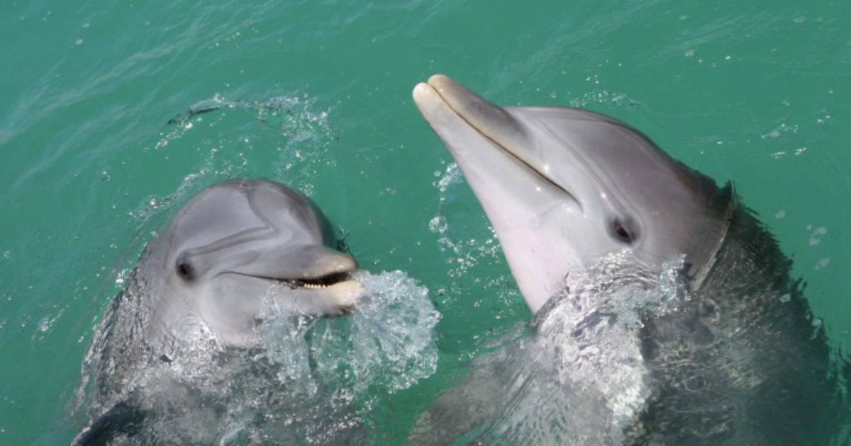 Interspecific aggression in dolphins | Noldus
