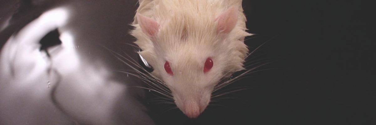 mice-alzheimers-disease