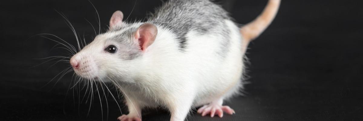motor-functioning-mice