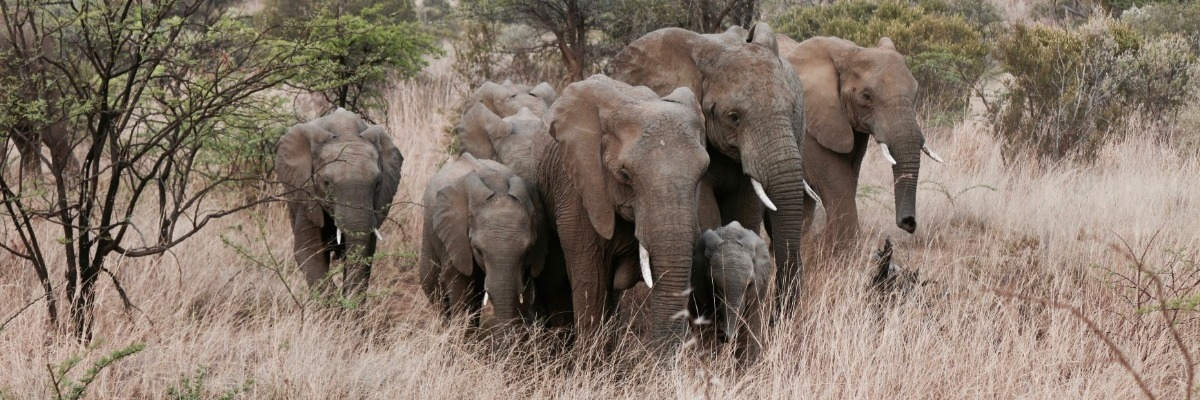 Observing social behavior and communication in wild elephants