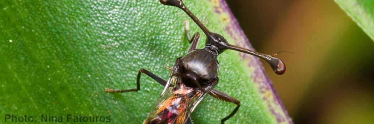 Bigger is not always better: hypothesis testing in sexual evolution