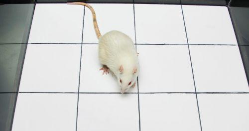 anabolic-steroids-rat-study