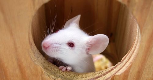 animal-behavior-research-blogs