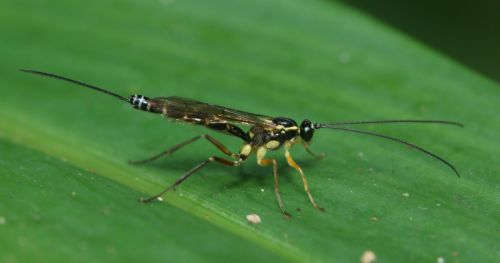 screening-beneficial-insects