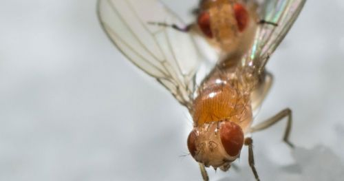 exploratory-activity-drosophila