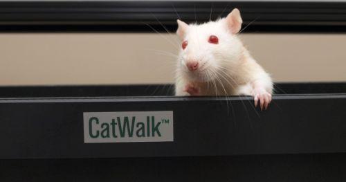 gait-research