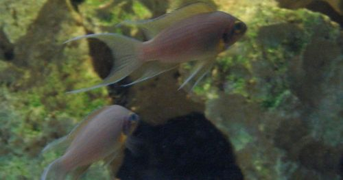 measuring-fish-aggression