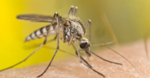 new-approach-battle-against-malaria
