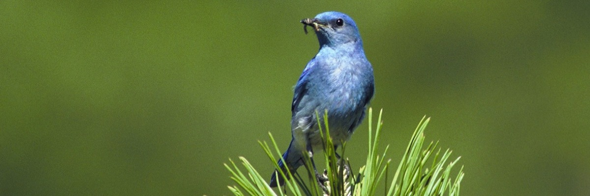Video tracking makes bird watching much easier