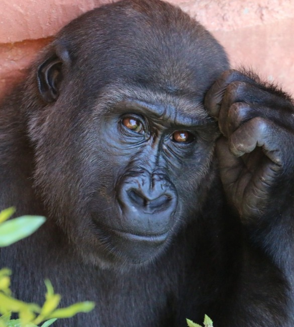 Solutions for Animal behavior observation