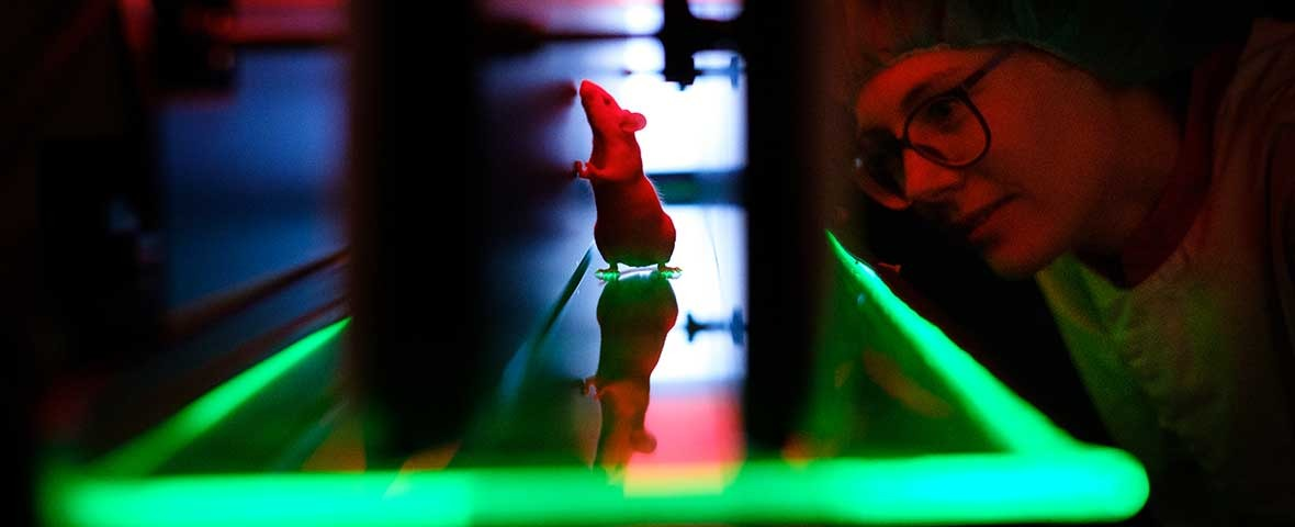 Mice with LED in Catwalk and woman