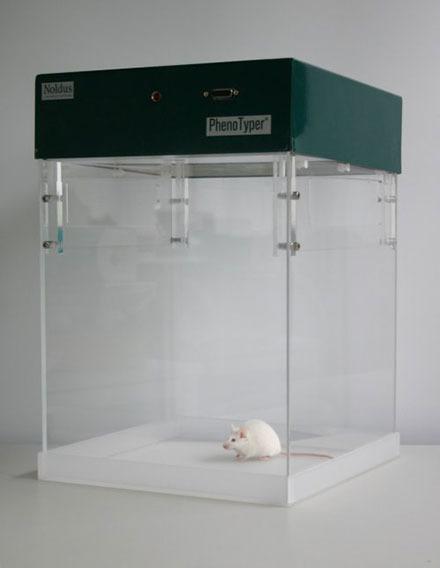 PhenoTyper open field white mouse rat