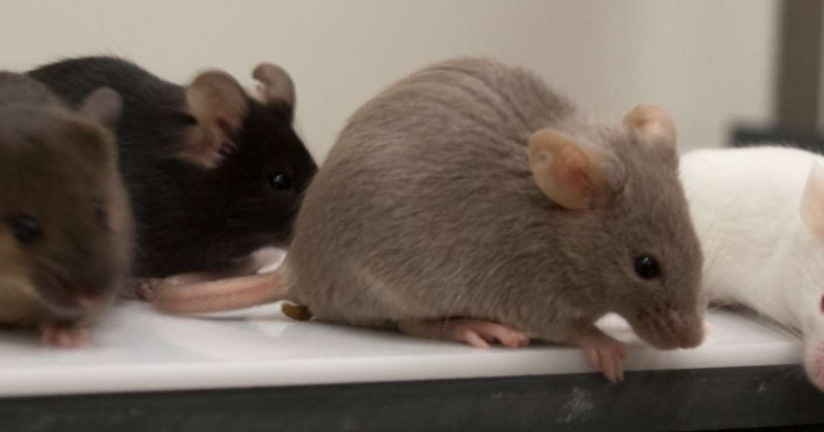 5-ways-to-measure-spatial-learning-rodents
