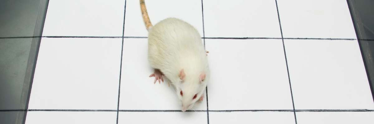 Exercise vs anabolic steroids: a rat study